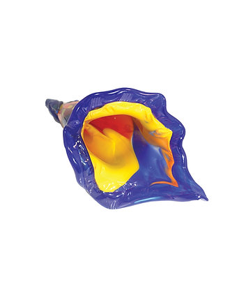 Trumpet Shell