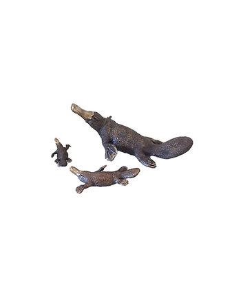 Platypus – Small – Swimming