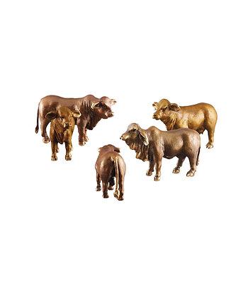 Braham Bull