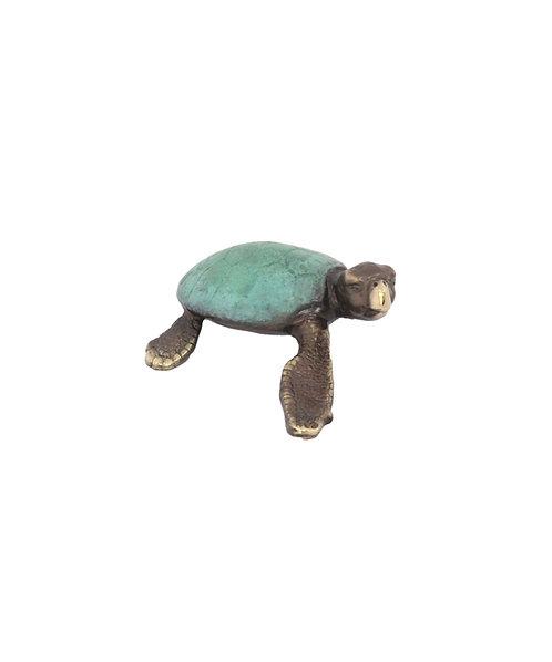 Turtle – Loggerhead