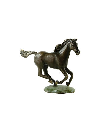 Horse  - Brumby Colt