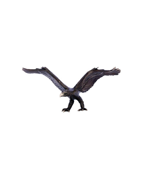 Eagle - Wedgetail – Small