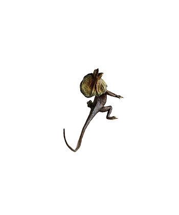 Lizard - Frilled Neck Edition 250