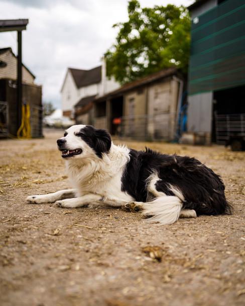 Polly Farm Photos -136.jpg