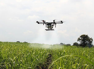 spraying-sugar-cane-2746350_640.jpg