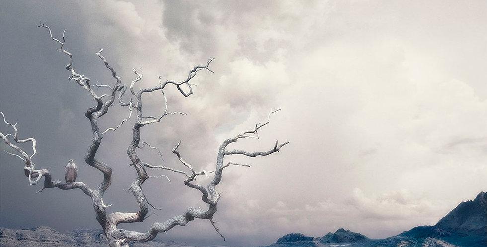 Lonely Tree by  Dirk Karsten