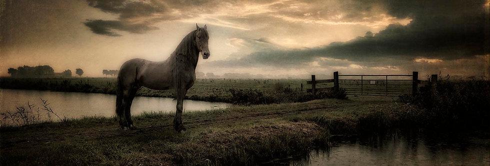 Dark Horse by Dirk Karsten