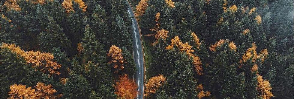Autumn Bend by Daniel Casson