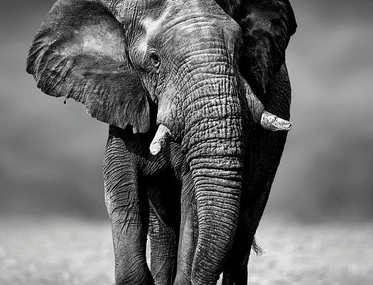 00091 The Walking Elephant by ARTITECT