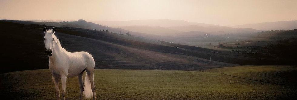 My Tuscani Horse by Dirk Karsten
