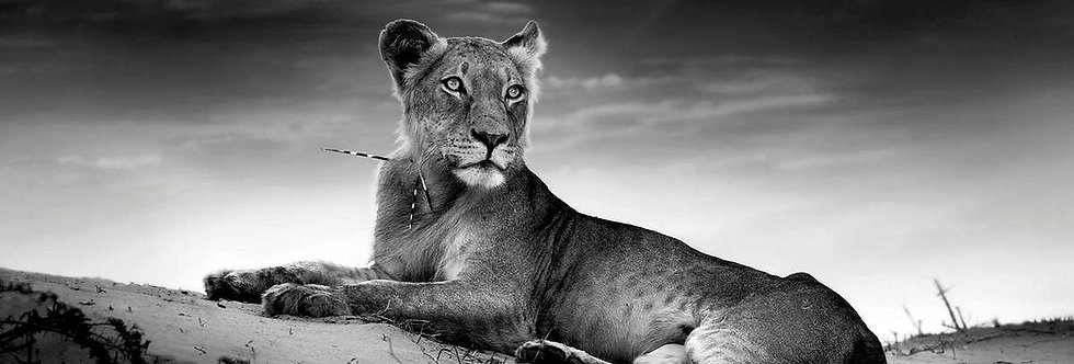 00090 The Lioness Queen by ARTITECT