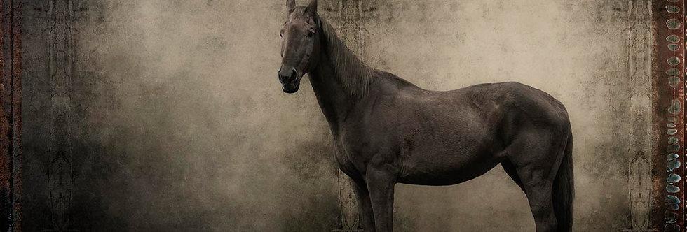 Posing Beauty by Dirk Karsten