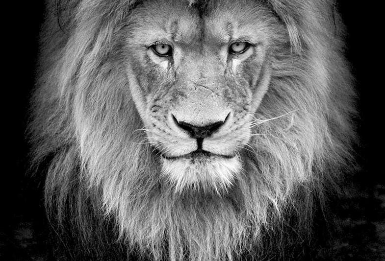 Portrait of the King by Wolf Ademeit