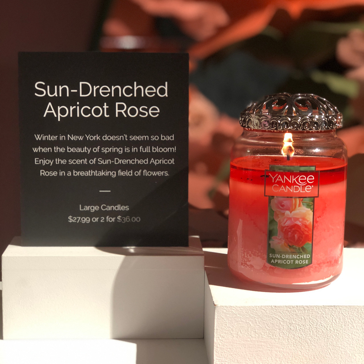 Sun-Drenched Apricot Rose- Yankee Ca
