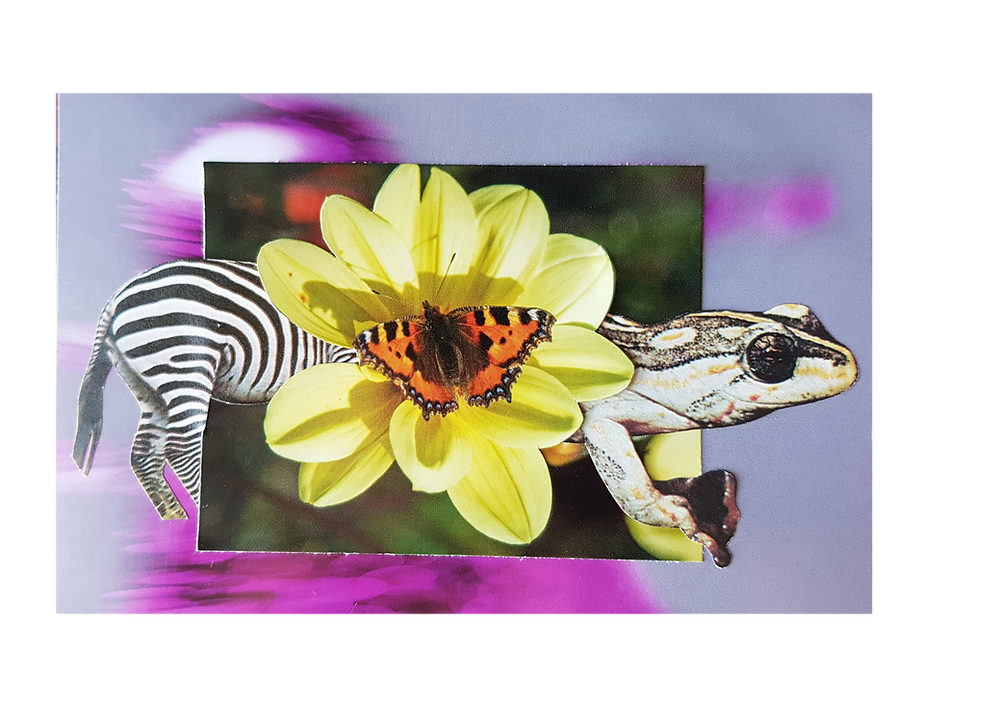 A cut out collage of a zebra mixed with a frog with a yellow flower at the centre and a butterfly landing on the flower.
