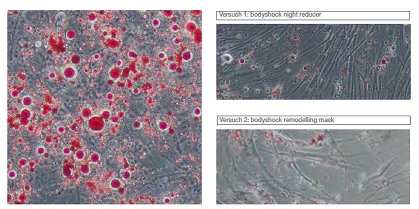 In vitro bodyshock 2 Health Beauty Lifestyle AG