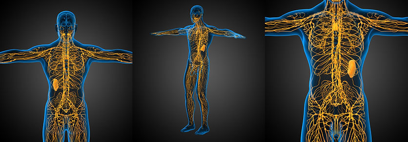 lymphsysystem.jpg