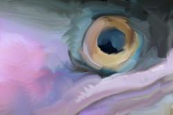 Trout Eye