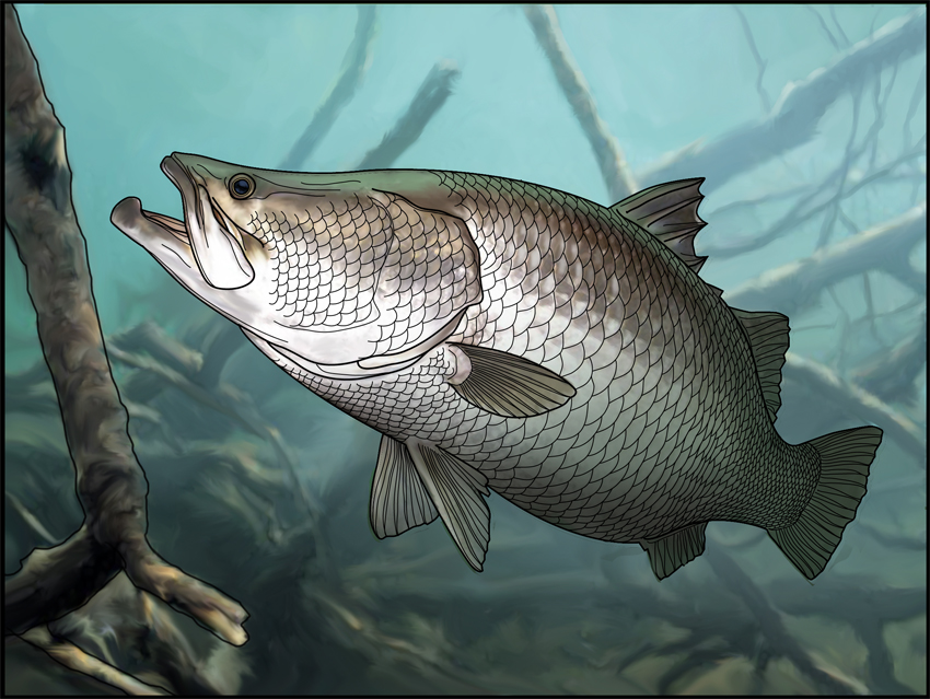 Barramundi copy copy.jpg