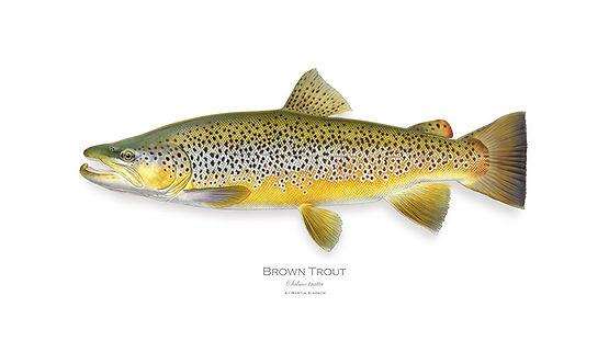 Brown website.jpg