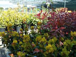 Various shrubs under glazed area (2).JPG