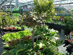 Various shrubs under glazed area (3).JPG
