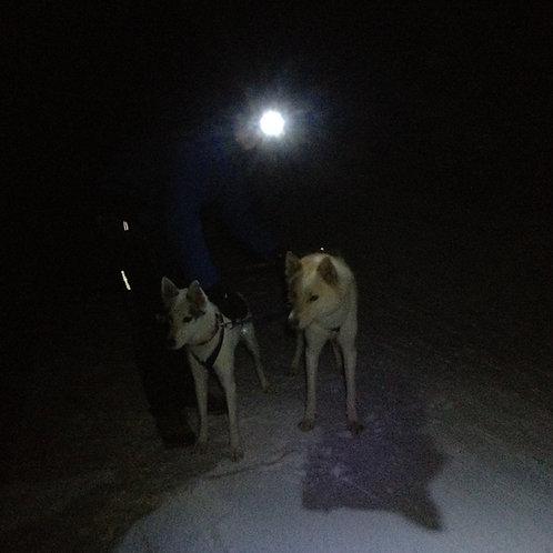 Schlittenhundefahrt bei Nacht