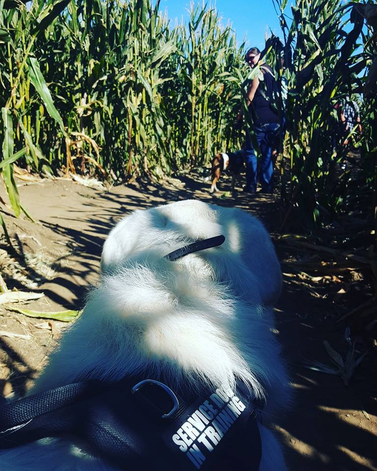 Ghost in the Corn maze