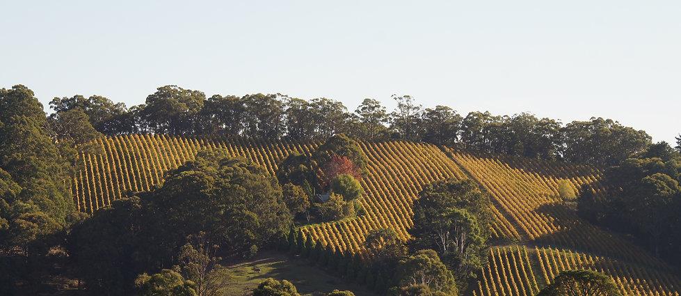 Whisson Lake Highest Elevated Vineyard in South Australia