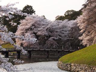 2014京都春色