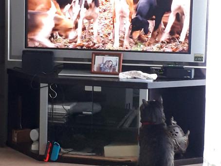 我が家とテレビ