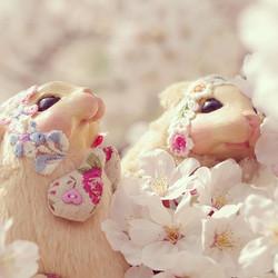 Topo _#桜 #スナネズミ