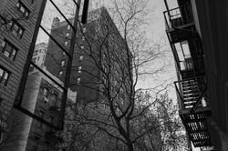NYC Balade 220