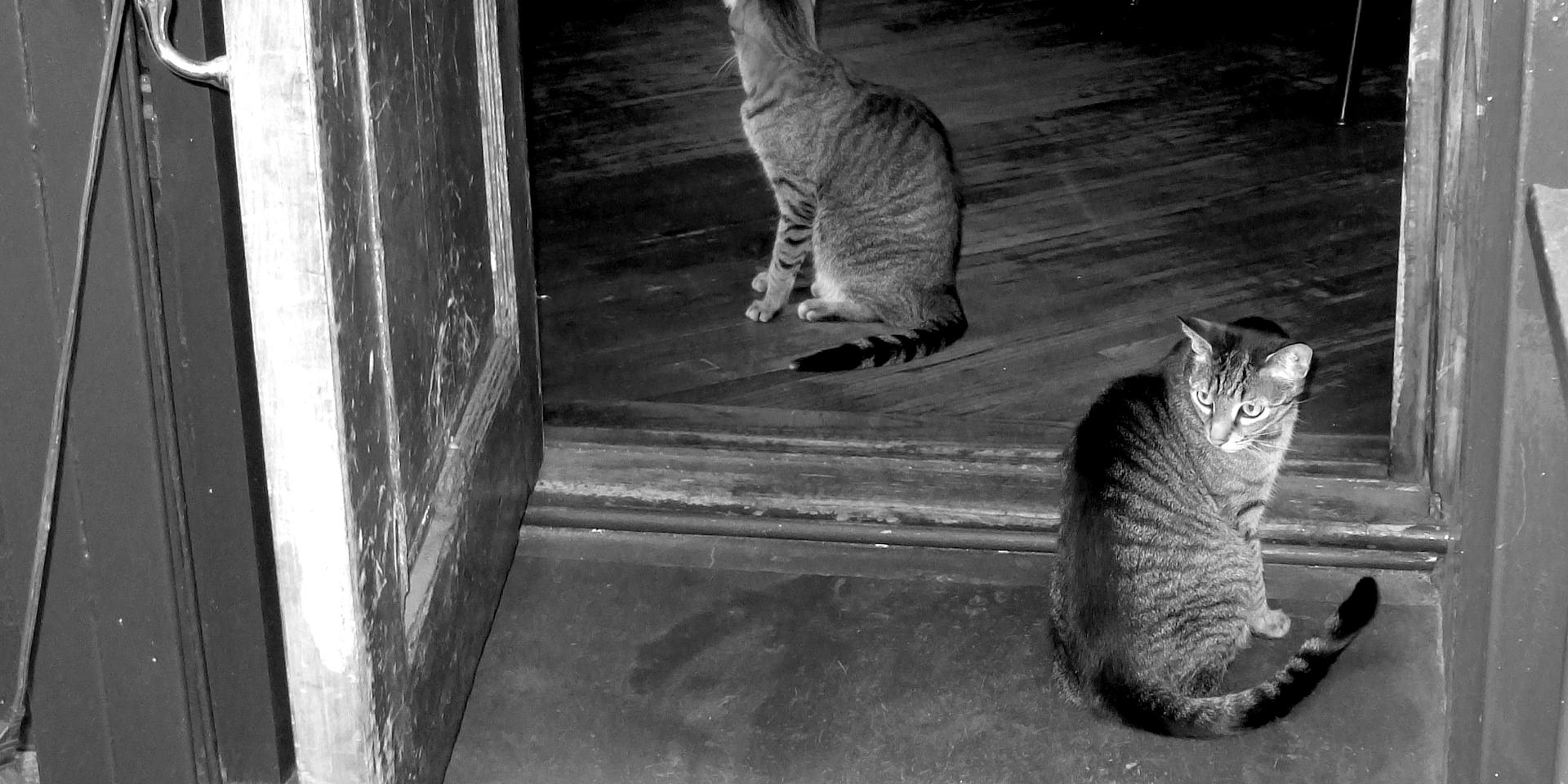 Mirrored Alley Cats