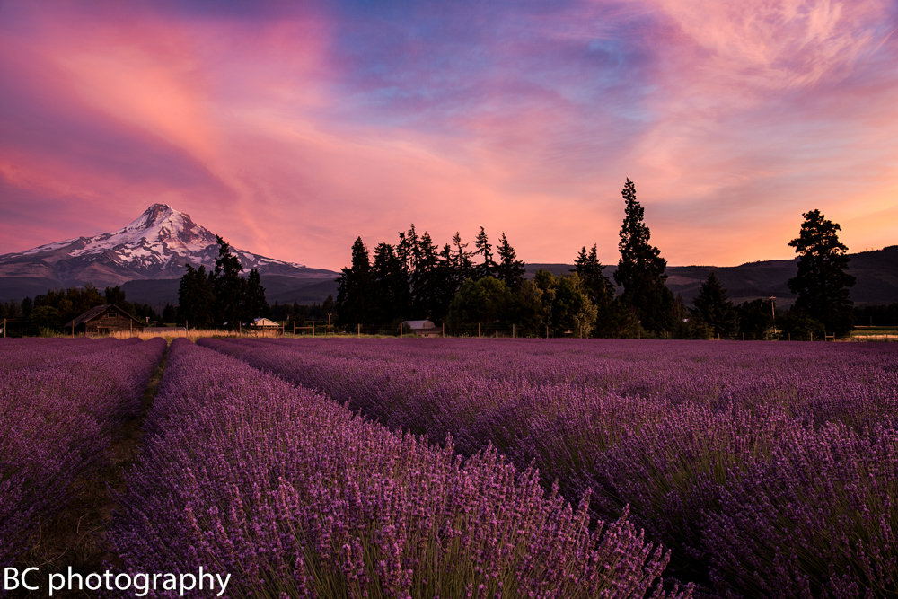 Lavender Valley  Photo Experience