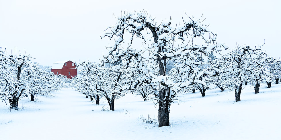 Wintertime in the Orchard