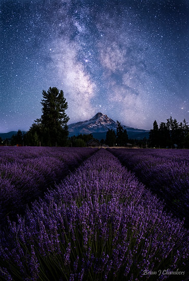 Milky Way and Lavender