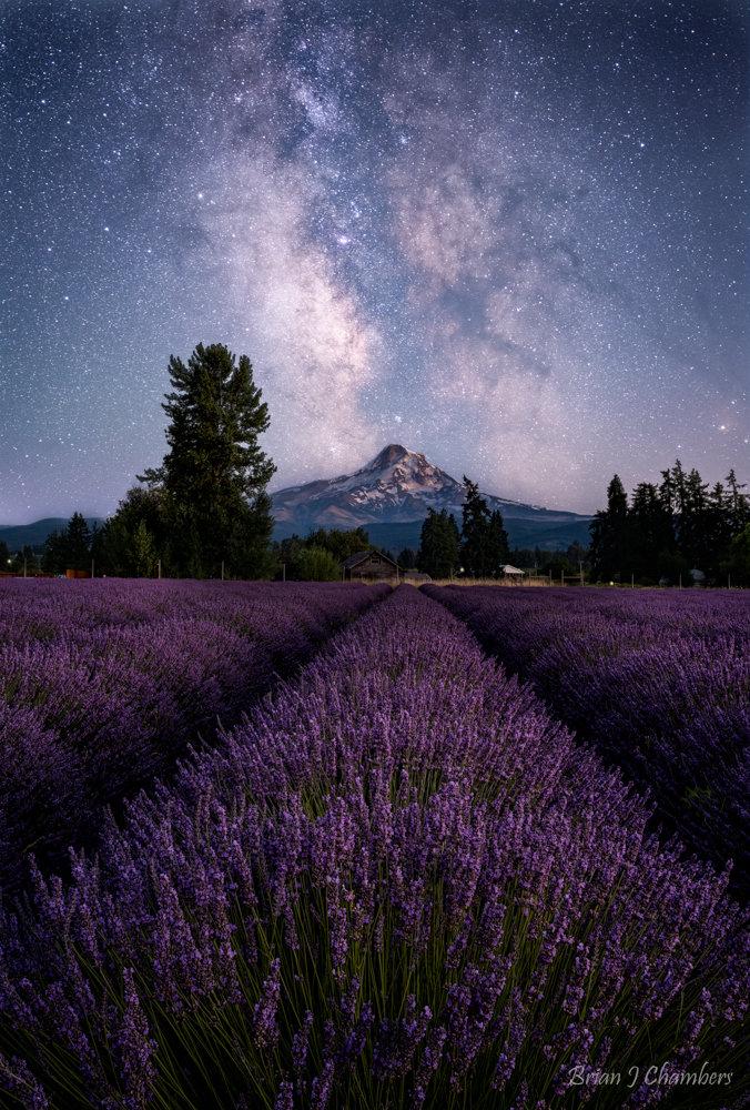 Lavender Valley Milky Way Experience