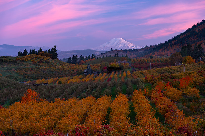 Mt Adams and fall orchard