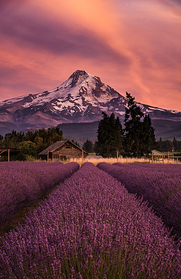 Lavender Valley sunset