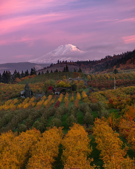 Mt Adams fall orchard II