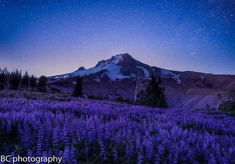 Purple Mt Majesty