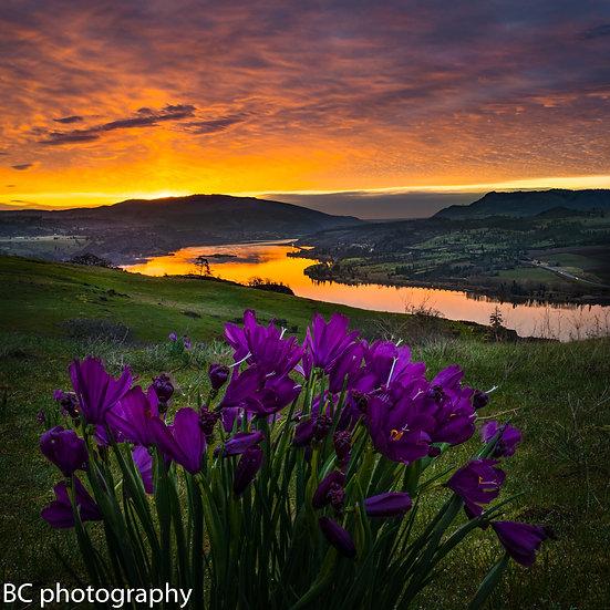 Syncline Sunrise