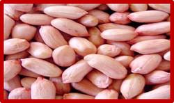 arachide-au-sc3a9nc3a9gal2
