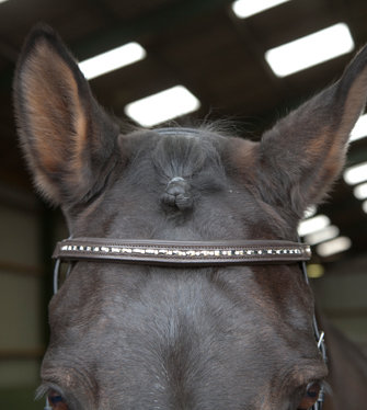 BB022- Leather Bind Diamanté Browband