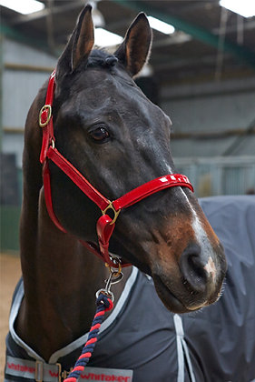 HC021- Whitaker Patent Leather Headcollar