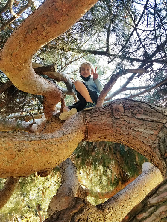 Kid playing in tree during Arise & Shine's Play Pod