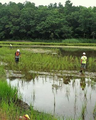 we build swamps.jpg