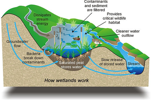 wetlands-diagram1.jpg