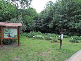 Gyógy- és fűszernövény kert